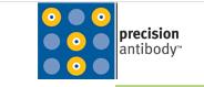 Precision Antibody