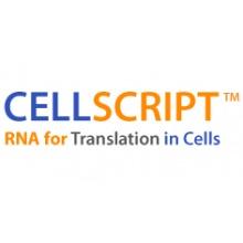Cellscript/INCOGNITO™ SP6 Ψ-RNA Transcription Kit/C-ICSY110510/10 reactions