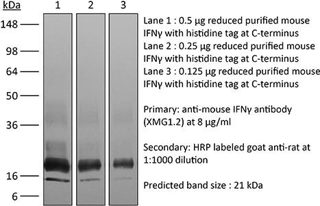 BioXcell/InVivoMAb anti-mouse IFNγ/DISCOUNTED ACADEMIC OR NON PROFIT: 25MG/BE0055-A025mg