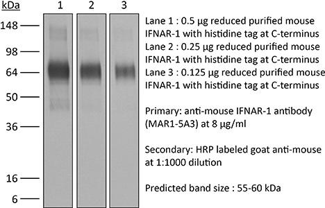 BioXcell/InVivoMAb anti-mouse IFNAR-1/REGULAR 1MG/BE0241-R001mg