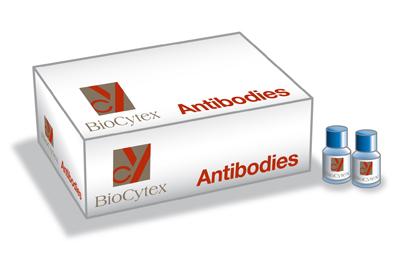 Biocytex/Fiche Anticorps monoclonal anti-CD16, clone CB16, conjugué R-PE/2 ml/5130-PE100T