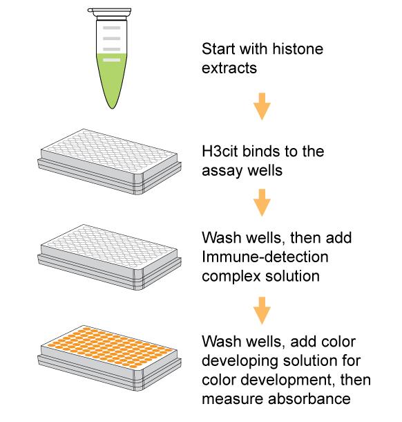Epigentek/EpiQuik Histone H3 Citrullination ELISA Kit (Colorimetric)/P-3095-48/48 assays