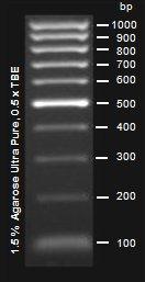 Epigentek/EpiQuik 100 bp DNA Ladder Express/R12002-1/500 µl