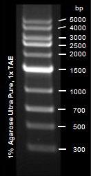 Epigentek/EpiQuik Mid-Range DNA Ladder Express/R12004-1/500 µl