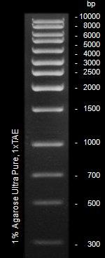 Epigentek/EpiQuik 1 Kb DNA Ladder/R12006-1/500 µl