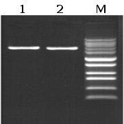 Epigentek/EpiQuik Long Taq DNA Polymerase/R12012-3/2500 Units