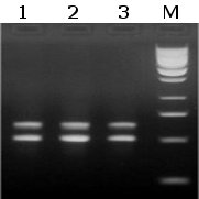 Epigentek/Methylamp Hot Taq DNA Polymerase/R12015-2/1000 Units