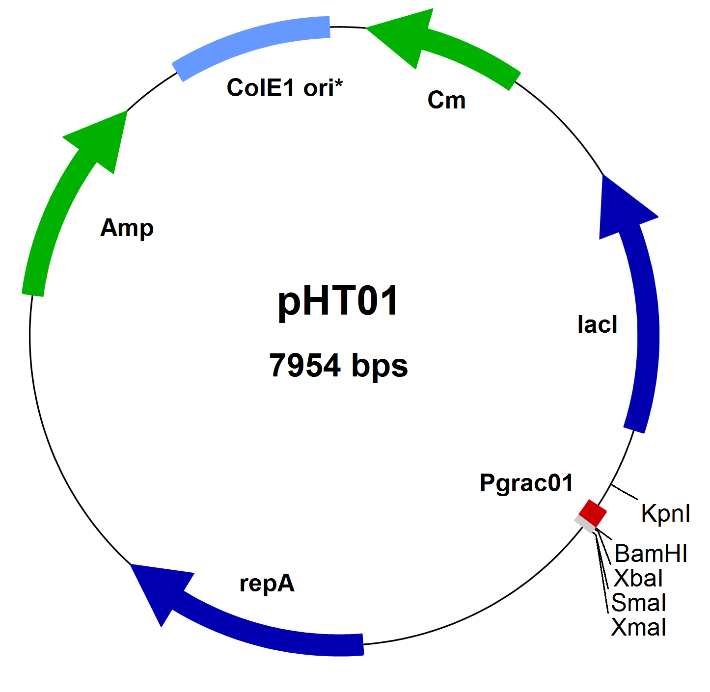 MoBiTec/pHT01 vector, lyophilized plasmid DNA/Bacillus Expression Systems/PBS001