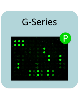 RayBiotech/Human RTK Phosphorylation Array G1/4 Sample Kit/AAH-PRTK-G1-4