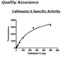 Usbio/Cathepsin S, C-terminal HIS-Tag, Recombinant, Human (Cathepsin-S, CATS, CTSS, MGC3886)/10ug/C2097-77R