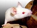 Usbio/M3005-35  Anti-Mesenchymal Stem Cells (mMSC), Mouse, Normal, Cryopreserved/500K Cells/M3005-35