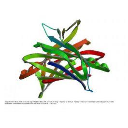 BBI Solutions/Prealbumin/P171-2