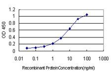 Biosensis/Mouse monoclonal antibody to human CD316 antigen [1E4]: IgG/M-911-100/100 µg