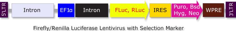 Biosettia/Firefly Luciferase (FLuc)-IRES-Puro Lentivirus/Nucleic Acid Purification/GlowCell-14p