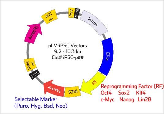 Biosettia/Human pLV-iPSC Lentiviral Vector Set-1 (Oct4, Sox2, Nanog, Lin28)/Nucleic Acid Purification/iPSC-pset01