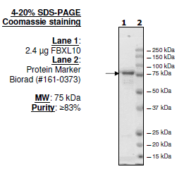 Bpsbioscience/FBXL10 (KDM2B, JHDM1B), FLAG-tag/50120/20 µg
