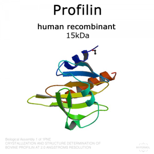 hypermol/Profilin (human recombinant) - 2x50µg/8418-01