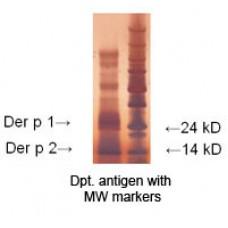 indoor biotechnologies/LoTox™™ D. pteronyssinus Antigen (LTN-DPE-4)/LTN-DPE-4