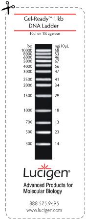 Gel-Ready 1kb DNA Ladder
