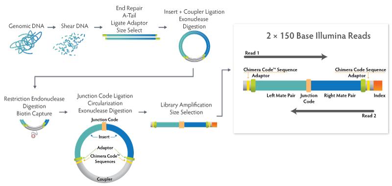 NxSeq Long Mate Pair Workflow