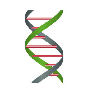 Minerva-biolabs/ExtractNow™ DNA Mini Kit/601-1050/50 extractions