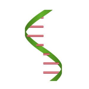 Minerva-biolabs/ExtractNow™ RNA Mini Kit/603-1050/50 extractions