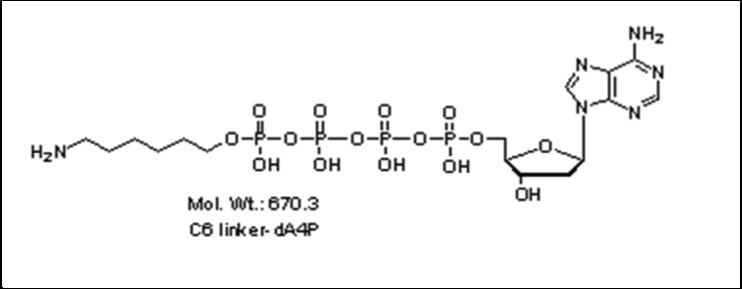 Mychem/6-aminohexyl-2\'-deoxyadenosine-5\'-tetraphosphate/A-1009/1 µmole