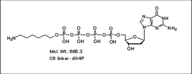 Mychem/6-aminohexyl-2\'-deoxyguanosine-5\'-tetraphosphate/A-1010/10 µmole