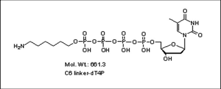 Mychem/6-aminohexyl-2\'-deoxythymidine-5\'-tetraphosphate/A-1011/1 µmole