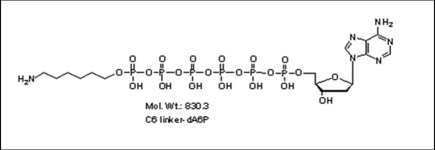 Mychem/6-aminohexyl-2\'-deoxyadenosine-5\'-hexylphosphate/A-1013/10 µmole