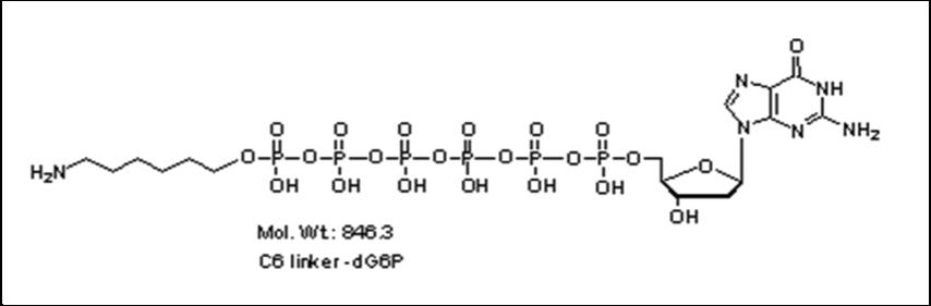 Mychem/6-aminohexyl-2\'-deoxyguanosine-5\'-hexylphosphate/A-1014/10 µmole