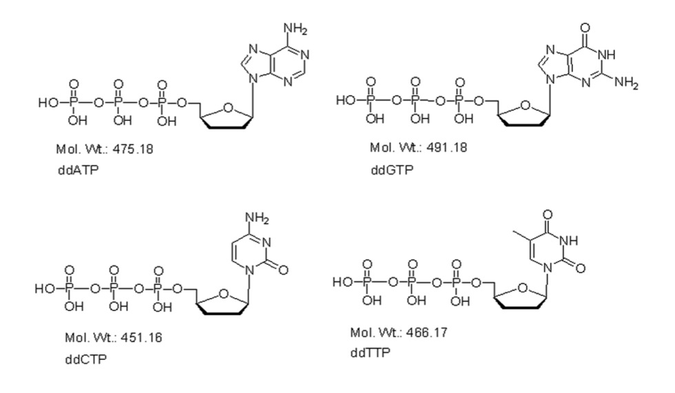 Mychem/2\',3\'-ddNTP set: equimolar ddATP, ddGTP, ddTTP and ddCTP/D-1005/1 µmole