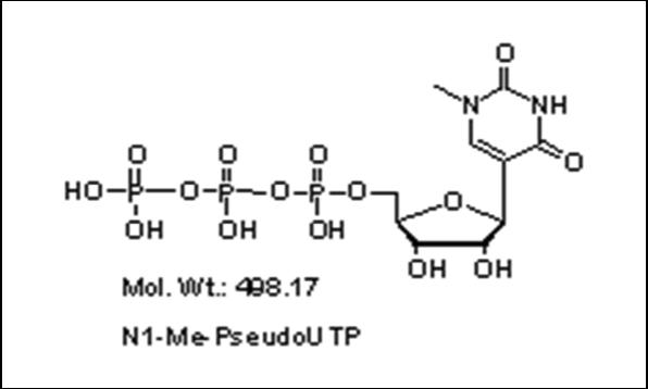 Mychem/N1-methyl-Pseudo-uridine-5\'-triphosphate/R-1010/10 µmole