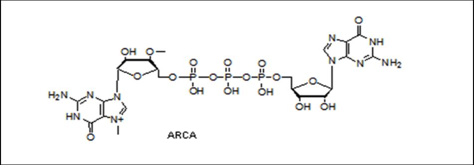 Mychem/ARCA/R-1011/1 µmole