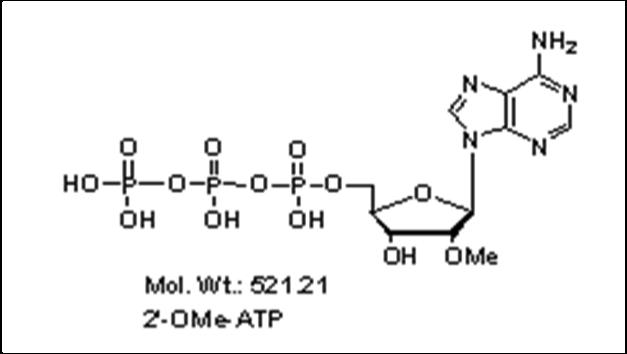 Mychem/2\'-O-Methyladenosine-5\'-Triphosphate/R-1012/100 µmole