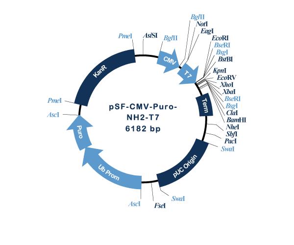Oxford Genetics/pSF-CMV-Puro-NH2-T7 (OG3218) N-terminal T7 tag mammalian plasmid/OG3218/1 Ea