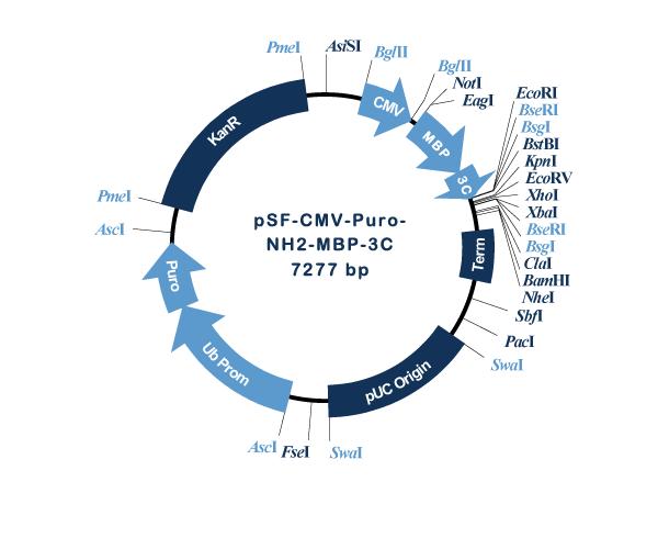 Oxford Genetics/pSF-CMV-Puro-NH2-MBP-3C (OG1155) N-terminal MBP tag mammalian plasmid/OG1155/1 Ea