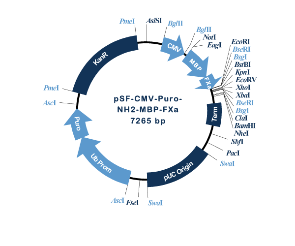 Oxford Genetics/pSF-CMV-Puro-NH2-MBP-FXa (OG1077) N-terminal MBP tag mammalian plasmid/OG1077/1 Ea