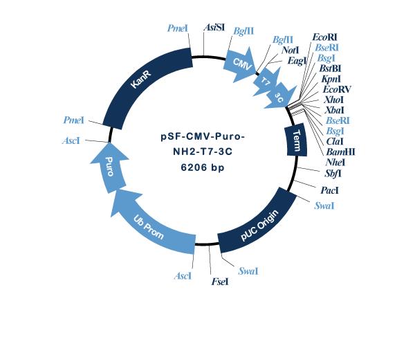 Oxford Genetics/pSF-CMV-Puro-NH2-T7-3C (OG1151) N-terminal T7 tag mammalian plasmid/OG1151/1 Ea