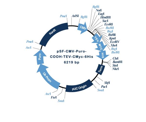 Oxford Genetics/pSF-CMV-Puro-COOH-TEV-CMyc-6His (OG1234) C-terminal 6 His and CMyc dual tag mammalian plasmid/OG1234/1