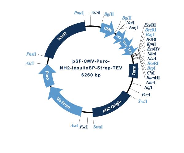 Oxford Genetics/pSF-CMV-Puro-NH2-InsulinSP-Strep-TEV (OG1421) Insulin secretion and Strep tag plasmid/OG1421/1 Ea