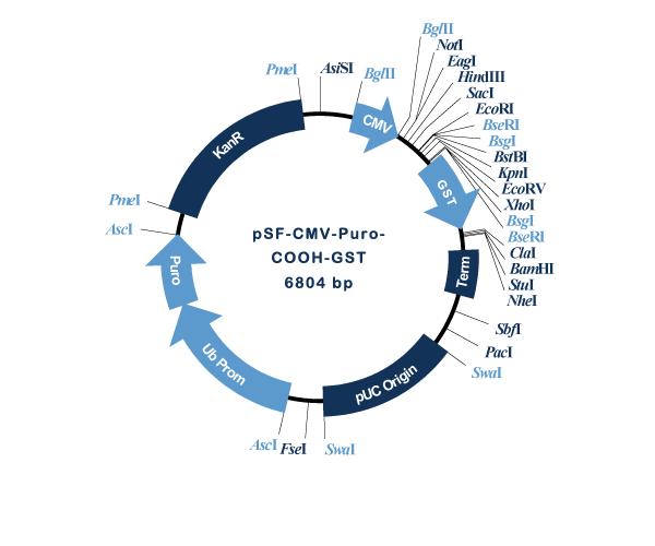 Oxford Genetics/pSF-CMV-Puro-COOH-GST (OG3426) C-terminal GST tag mammalian plasmid/OG3426/1 Ea