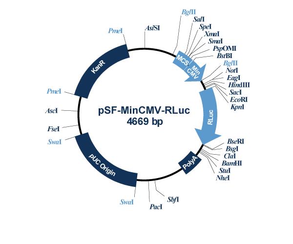 Oxford Genetics/pSF-MinCMV-Rluc (OG571) Minimal CMV Promoter Renilla Plasmid/OG571/1 Ea