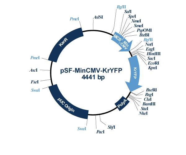 Oxford Genetics/pSF-MinCMV-KrYFP (OG574) Minimal CMV YFP Expression Vector/OG574/1 Ea