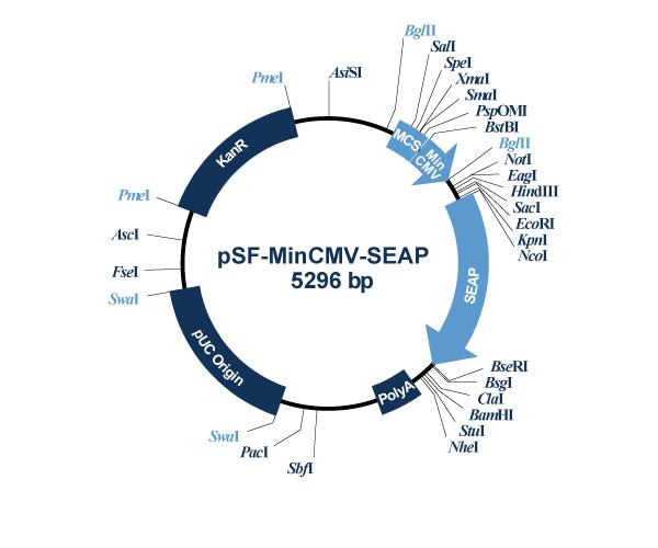 Oxford Genetics/pSF-MinCMV-SEAP (OG577) Alkaline Phosphatase Minimal CMV Plasmid/OG577/1 Ea