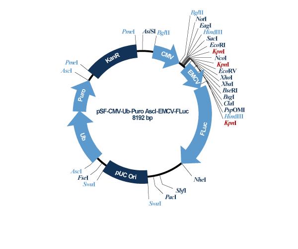 Oxford Genetics/pSF-CMV-Ub-Puro_AscI-EMCV-Fluc (OG602) EMCV IRES Luciferase Puromycin Vector/OG602/1 Ea