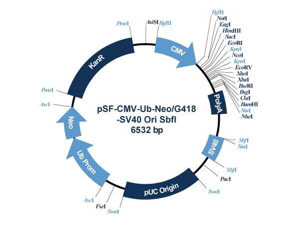 Oxford Genetics/pSF-CMV-Ub-Neo_G418-SV40_Ori_SbfI (OG138) G418 / SV40 Ori Plasmid/OG138/1 Ea