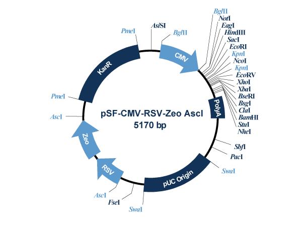 Oxford Genetics/pSF-CMV-RSV-Zeo_AscI (OG382) RSV Promoter Zeocin Plasmid/OG382/1 Ea