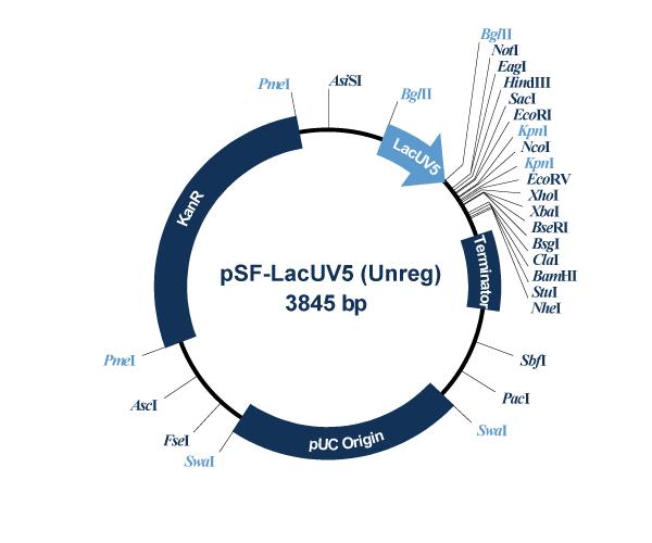 Oxford Genetics/pSF-OXB19 (OG34) Medium stength Bacterial Promoter/OG34/1 Ea