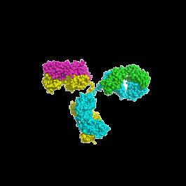U-protein/Adrenocorticotropic hormone monoclonal antibody/P-Ab0001/100 microgram